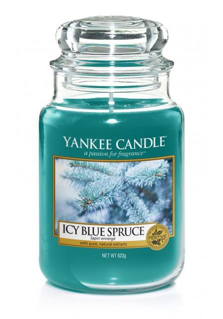 Заснеженная ель Icy Blue Spruce  623 гр / 110-150 часов